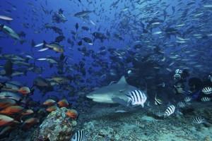 Diving FIJI 2010
