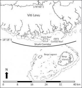 2. shark-corridor-beqa-adventure-divers-pacific-harbour-fiji