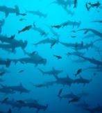 I1a. FORGOTTEN ISLANDS (KALABAHI – SAUMLAKI) (SURESTE MAR DE BANDA). CRUCERO CON EL «OCEANIC»