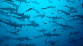 I1.1. FORGOTTEN ISLANDS (KALABAHI – SAUMLAKI) (SURESTE MAR DE BANDA). CRUCERO CON EL OCEANIC