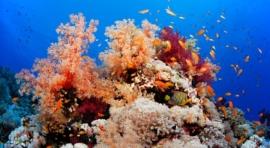 "D1h. EGIPTO. CRUCERO CON LA FLOTA «SEA SERPENT FLEET» POR LA RUTA ""EXTREMO SUR»: SAINT JOHNS Y ELPHINSTONE (MAR ROJO)"