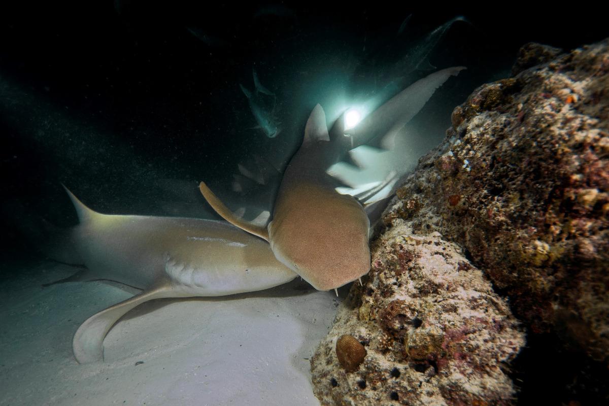 aspasia-dive_maldivas_viaje-de-buceo_buceo_diving-10