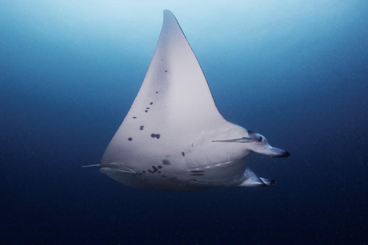 aspasia-dive_maldivas_viaje-de-buceo_buceo_diving-8