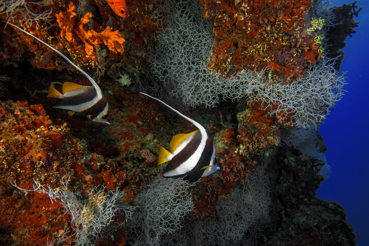 aspasia-dive_maldivas_viaje-de-buceo_buceo_diving-9