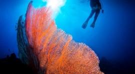 B5a. VISAYAS – ISLAS DE PANGLAO Y BALICASAG. ALONA VIDA BEACH RESORT. SEA EXPLORERS