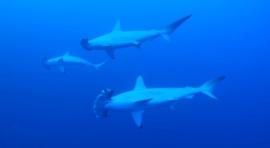 B2a. MAR ROJO. CRUCERO «DAEDALUS / ROCKY / ZABARGAD» CON EL BARCO «OCEANOS» (DEL 25 DE ABRIL AL 3 DE MAYO DE 2020)