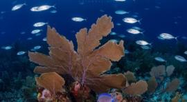 B3b. MAR ROJO. CRUCERO NORTE Y SAFAGA CON EL M/Y OCEANOS. 24 INMERSIONES (DEL 22 AL 31 DE AGOSTO 2020). OPCIÓN ESTAMBUL 5 DÍAS