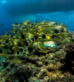 E1a. ISRAEL – EILAT. SHULAMIT'S EILAT DIVING ADVENTURES