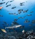 D2d. POLINESIA FRANCESA. HUAHINE – ISLAS DE LA SOCIEDAD. PACIFIC BLUE ADVENTURE