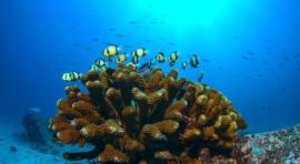 D2a. SEYCHELLES – ISLA DE MAHÉ. BLUE SEA DIVERS