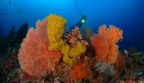 GRANDES INMERSIONES.  CAPE KRI (Isla de Kri, Estrecho de Dampier, Raja Ampat, Papúa Occidental, Indonesia)